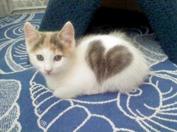 søte katter