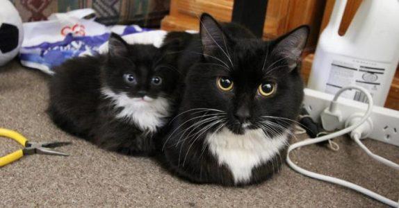Som mor så datter! Her er 14 kattunger som er som små KLONER av mammaene sine: