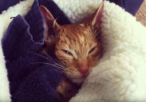 Картинки по запросу freezing cat