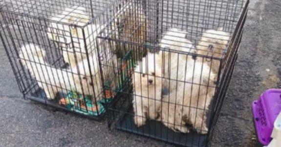 9 mishandlede hunder blir funnet dumpet utenfor kennelen: Så oppdager de det UHYGGELIGE