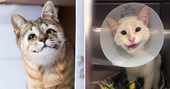 20 bilder som får hjertet til å smelte: Uperfekte dyr som er helt PERFEKTE