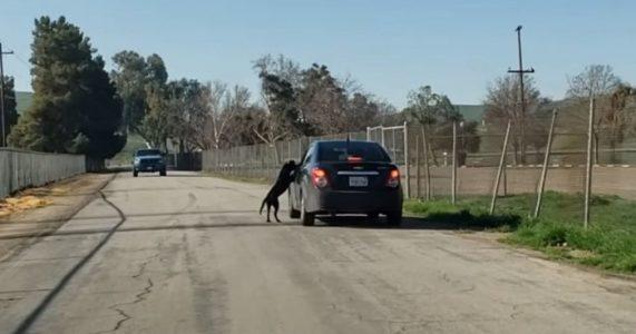 Den desperate hunden løper etter familien som dumper ham: Det som skjer da er HJERTESKJÆRENDE
