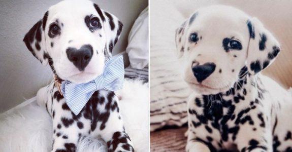 Så unik! Se hvordan denne dalmatiner-valpen har fått hele nettet til å SMELTE: