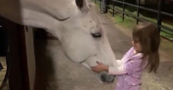Den lille jenta vil kose med den digre hesten – men SE på dyrets reaksjon!