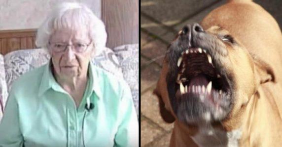 Pitbull-flokken angriper den 97-årige kvinnen. Da kommer den usannsynlige HELTEN til unnsetning